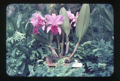 . (Kaïopai°) Tags: vintage 1960er 1960s hannover garten park berggarten herrenhausen botanischergarten botanicgarden orchidee plant flower pflanze