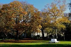 De stilte van herfst (Roel Wijnants) Tags: herfst bladeren kleuren jaargetijde tuin groen bankje rust roelwijnants wandelvondst wandelen roelwijnantsfotografie somerightsreserved ccbync hofstijl haagspraak denhaag thehague absoluteleythehague cityilove fotogebruik licentievoorwaarden