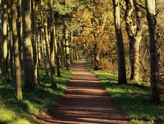Trail (NanashiNoProfile) Tags: loch leven rspb heritage kinross scotland kinrossshire perthshire walk walking canon 700d autumn autumnal november