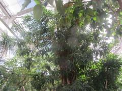 Tropical Trees! (d.kevan) Tags: