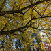 Autumn on the campus of Southern Oregon University