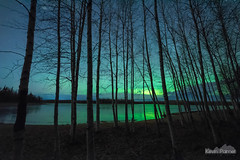 Last Night in Alaska (kevin-palmer) Tags: alaska northpole chenalake northernlights aurora auroraborealis green color colorful night sky stars starry space astronomy astrophotography nikond750 sigma14mmf18 october fall autumn frozen ice icy cold clouds birchtrees