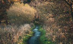 Onwards (NanashiNoProfile) Tags: loch leven rspb heritage kinross scotland kinrossshire perthshire walk walking canon 700d autumn autumnal november