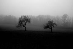 Two trees (stefankamert) Tags: trees landscape fog noir noiretblanc blackandwhite blackwhite dark grain ricoh stefankamert gr griii 28mm bw mood landscapes