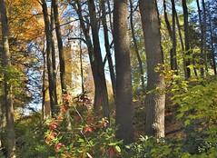 A tower through the trees... (Jane Lazarz Nature Photography) Tags: walkingnewengland janelazarz massachusetts fallinnewengland nikonp900 nikon massachusettsautumn autumn newenglandcountryside westernmassachusetts nikonnature autumninnewengland stanleypark westfieldmassachusetts trails woods trailinthewoods walkinthewoods hiddentower