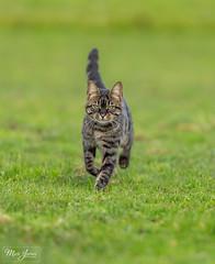 Curiosity (mark-james) Tags: cat photography portrait nature naturephotography animal animals natureandanimals