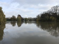 Photo of Medmenham walks with the dogs by the Thames, Buckinghamshire - November 2019