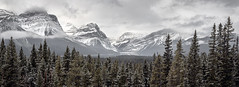 Canadian Rocky Mountains 3 Jason Gambone-135-Pano (Jason Gambone) Tags: jasongambonecom october jasongambone jfgambone mountains jfgambonephotos rockies banffnationalpark jasper wildlife alberta jfgambonephotography canada canadianrockymountains 2019 banff