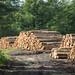 Brittany Logging