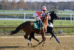 "2019-11-14 (37) r4 Ricardo Chiappe on #5 Joyful Noise (JimFleenor) Tags: photos photography md maryland marylandracing marylandhorseracing equine jockey جُوكِي ""赛马骑师"" jinete ""競馬騎手"" dżokej jocheu คนขี่ม้าแข่ง jóquei žokej kilparatsastaja rennreiter fantino ""경마 기수"" жокей jokey người horses thoroughbreds equestrian cheval cavalo cavallo cavall caballo pferd paard perd hevonen hest hestur cal kon konj beygir capall ceffyl cuddy yarraman faras alogo soos kuda uma pfeerd koin حصان кон 马 häst άλογο סוס घोड़ा 馬 koń лошадь outside outdoors"