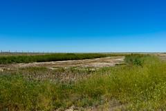 Dry Slough (Bracus Triticum) Tags: dry slough アルバータ州 alberta canada カナダ 8月 八月 葉月 hachigatsu hazuki leafmonth 2019 reiwa summer august