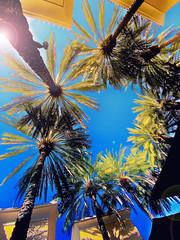 The Office (/\ltus) Tags: socal southerncalifornia palmtrees office california cali work hdr iphone iphone11 internalhdr oc orangecounty theoc irvine