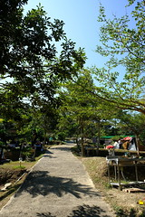 DSCF5737 (諾雅爾菲) Tags: fujifilmxe3 taiwan 台灣 桃園 鑫園馬告露營區 鑫園馬告咖啡 露營 camping
