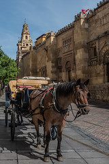 Cathedral of Córdoba (MichellePhotos2) Tags: horse carriage cathedral córdoba spain bell tower sony rx100 andalusia mosque church