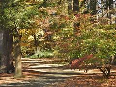 Fall pathway... (Jane Lazarz Nature Photography) Tags: walkingnewengland janelazarz massachusetts fallinnewengland nikonp900 nikon massachusettsautumn autumn newenglandcountryside westernmassachusetts nikonnature autumninnewengland stanleypark westfieldmassachusetts trails woods trailinthewoods walkinthewoods