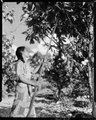 Cacao Plantations, Sāmoa