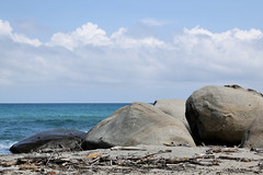 playas de Tayrona (daniel virella) Tags: tayrona sea caribean park nature colombia america sudamérica suramérica