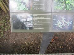 Plant Information (d.kevan) Tags: plants arganzuelahothouse madrid zonatropical1 description photos origin species commonname family