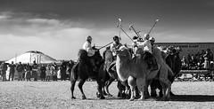The Camel Polo Match (Bulgam Sum, Mongolia. Gustavo Thomas © 2019) (Gustavo Thomas) Tags: polo camel sports mongolia gobi govi dessert match poloplayers mono mongolian bnw blackandwhite blancoynegro monocromático nikon travel adventure viyager