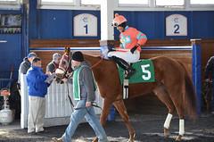 "2019-11-14 (33) r4 Ricardo Chiappe on #5 Joyful Noise (JimFleenor) Tags: photos photography md maryland marylandracing marylandhorseracing equine jockey جُوكِي ""赛马骑师"" jinete ""競馬騎手"" dżokej jocheu คนขี่ม้าแข่ง jóquei žokej kilparatsastaja rennreiter fantino ""경마 기수"" жокей jokey người horses thoroughbreds equestrian cheval cavalo cavallo cavall caballo pferd paard perd hevonen hest hestur cal kon konj beygir capall ceffyl cuddy yarraman faras alogo soos kuda uma pfeerd koin حصان кон 马 häst άλογο סוס घोड़ा 馬 koń лошадь outside outdoors paddock"