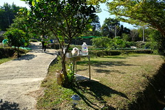 DSCF5759 (諾雅爾菲) Tags: fujifilmxe3 taiwan 台灣 桃園 鑫園馬告露營區 鑫園馬告咖啡 露營 camping