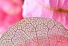 pink labyrinth (majka44) Tags: flower pink light nice macro macroworld structure lines colors 2019 nature bougainvillea macros