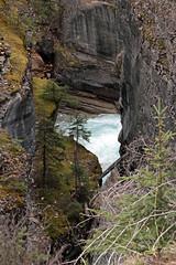 Down to the River (JB by the Sea) Tags: banff banffnationalpark alberta canada september2019 rockymountains rockies canadianrockies icefieldsparkway highway93 mistayacanyon mistayariver