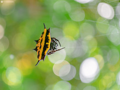 Hanging Around (Lr Home) Tags: spiders spider spiderweb a6000 sel30m35 web