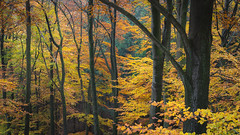 Autumn in the woods (Pascal Riemann) Tags: elfringhauserschweiz deutschland landschaft wald natur herbst autumn fall germany landscape nature outdoor forest