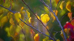 November's Last Dance (Christina's World :) Tags: autumn light leaves yellow gold garden glow botanicgarden tree painterly textures topaz scenic sandiego california westcoast artistic sandiegobotanicgarden foliage november 3804 spiderweb