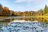 Windsor Great Park 17 November 2019 035b
