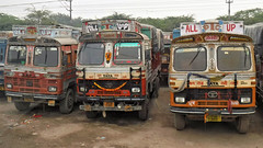 TATA Trio (Jungle Jack Movements (ferroequinologist) all righ) Tags: tat diwali new delhi agra malupur indi indian hp horsepower big rig haul freight cabover trucker drive transport carry delivery bulk lorry hgv wagon road highway nose semi trailer deliver cargo interstate articulated vehicle load freighter ship move motor engine power teamster truck tractor prime mover diesel injected driver cab cabin loud wheel exhaust double b decoration festival all up ptc goods carrier