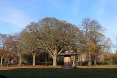 Queen Elizabeth II Field,Montrose_nov 19_580 (Alan Longmuir.) Tags: queenelizabethfield tayside montrose