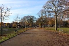 Queen Elizabeth II Field,Montrose_nov 19_591 (Alan Longmuir.) Tags: queenelizabethfield tayside montrose