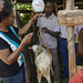 Weighing a goat, Kenya