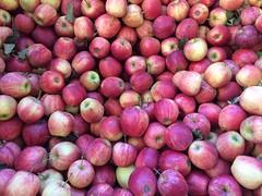 Say chinois  .  .  . (ericrstoner) Tags: apple chinois paradise pennsylvania lancastercounty lancaster farmmarket market paradiselane applesauce amish fairviewgroceries ronks