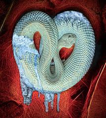 Cold Cold Heart (Wes Iversen) Tags: arubaislandrattlesnake coldcoldheart crotalusdurissusunicolor detroitzoo hmmm hankwilliams michigan mondaymusicmania nikkor18300mm royaloak yourcoldcoldheart cold composites concept ice icicles painterly pitviper scales snakes snow venomous