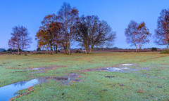 White Horse (nicklucas2) Tags: landscape newforest fritham hampshire greenpond tree sunrise horse