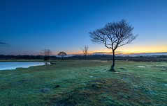 Puddles And Silhouettes (nicklucas2) Tags: landscape newforest fritham hampshire greenpond tree sunrise silhouette