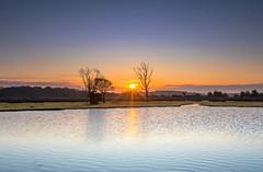Green Pond Sunrise (nicklucas2) Tags: landscape newforest fritham hampshire greenpond tree sunrise
