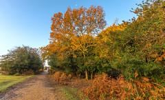 Forest Path (nicklucas2) Tags: landscape newforest fritham hampshire greenpond tree sunrise bracken