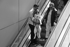Don't Bring Me Down (Photographer : Hans Stellingwerf) Tags: amsterdam stationsplein centralstationsquare streetphotography street nederland netherlands holland mensen people straatmoment straat straatfotografie straatportret streetportrait man dog hond