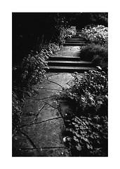 One Step at a Time (Thomas Listl) Tags: thomaslistl blackandwhite biancoenegro noiretblanc monochrome autumn mood dark path flora plants stairs stone atmosphere park 35mm