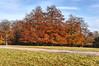 Windsor Great Park 17 November 2019 029b