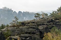Dunstiger Basteiblick (Panasonikon) Tags: panasonikon sonya7 felsen mountain baum tree landschaft landscape ilce7 sonyalpha sel2870 elbsandsteingebirge sächsischeschweiz bastei