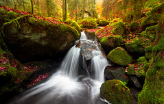 Divide and Conquer (b.adolphi) Tags: gertelbach schwarzwald blackforest bühlertal creek river stream forest autumn leaves water waterfall stones moss trees red green yellow house light