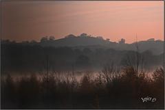 Remembering Autumn Mornings.. (Picture post.) Tags: landscape nature green autumn sunrise mist trees paysage arbre brume
