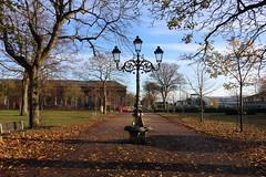 Queen Elizabeth II Field,Montrose_nov 19_586 (Alan Longmuir.) Tags: queenelizabethfield tayside montrose