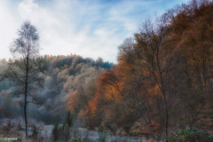 17112019-DSC_0013 (vidjanma) Tags: ourthe arbres automne givre matin