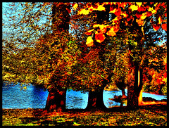 Lake through the beeches (tina negus) Tags: stoke rochford lake beeches autumn trees nature landscape